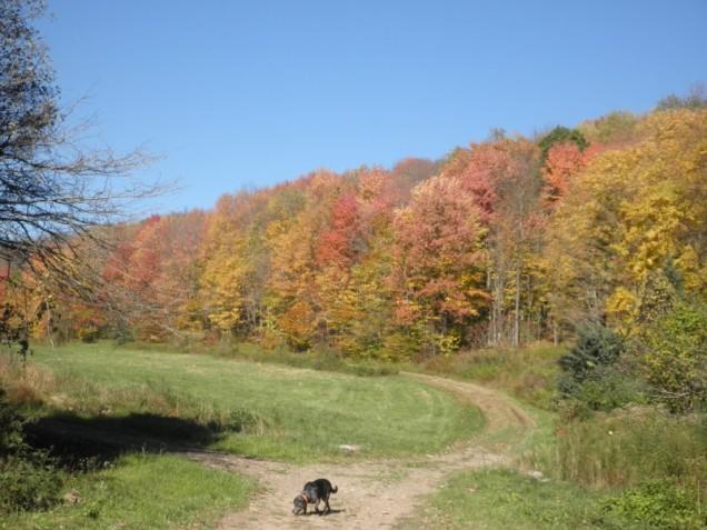 fall foliage in walton