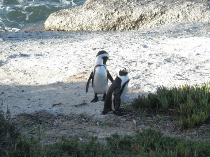 Penguins at Boulders