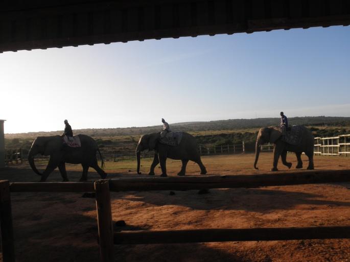 Kwantu Elephant Sanctuary