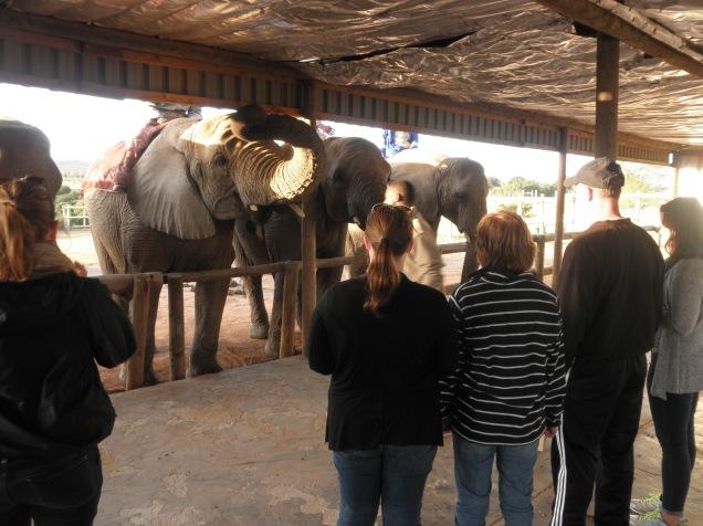 Feeding the elephants at Kwantu Elephant Sanctuary