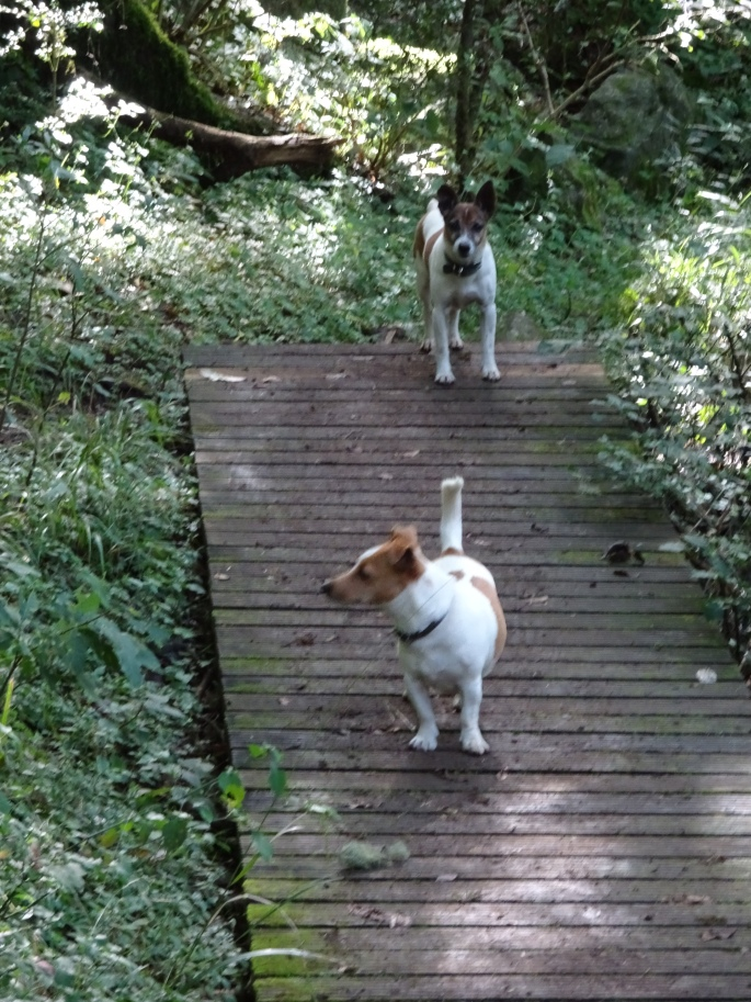 The two little dogs that accompanied us on our hike in Hogsback (photo cred to Todd Ogden)