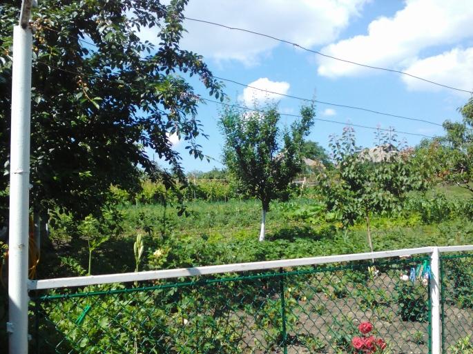 Our HUGE garden