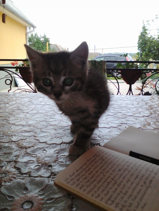 Journaling and playing with one of kittens