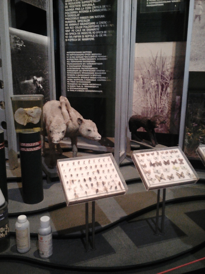 An exhibit on the destruction of nature in Moldova caused by chemicals and pesticides, and showing mutated animals with two heads at the National Museum of Ethnography and Natural Science