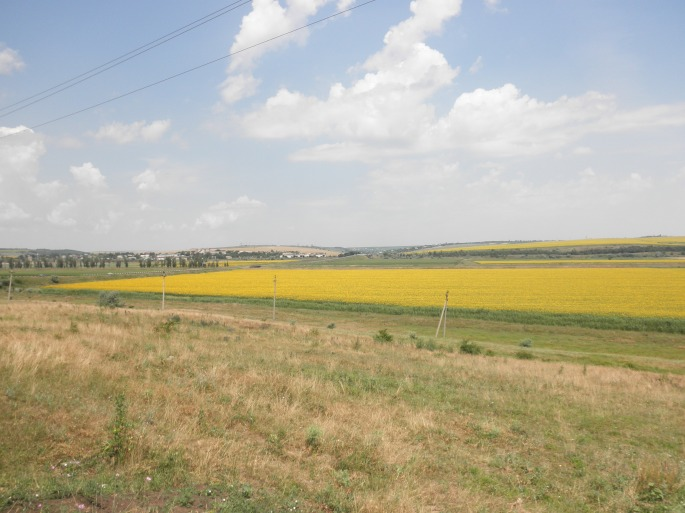 Gorgeous sunflower fields in Stefan Voda raion