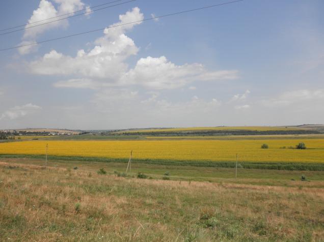 Gorgeous sunflower fields in Stefan Voda Raion