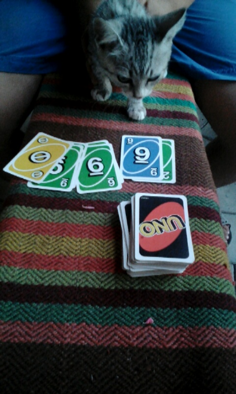 Playing Uno with Mac, the cat...but actually with my host brother