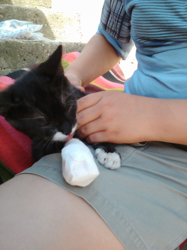 Junior with his bandaged paw- which is all healed up and fine now!