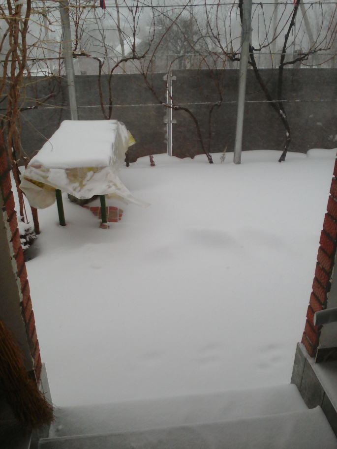 """Our first """"real"""" snowfall"""